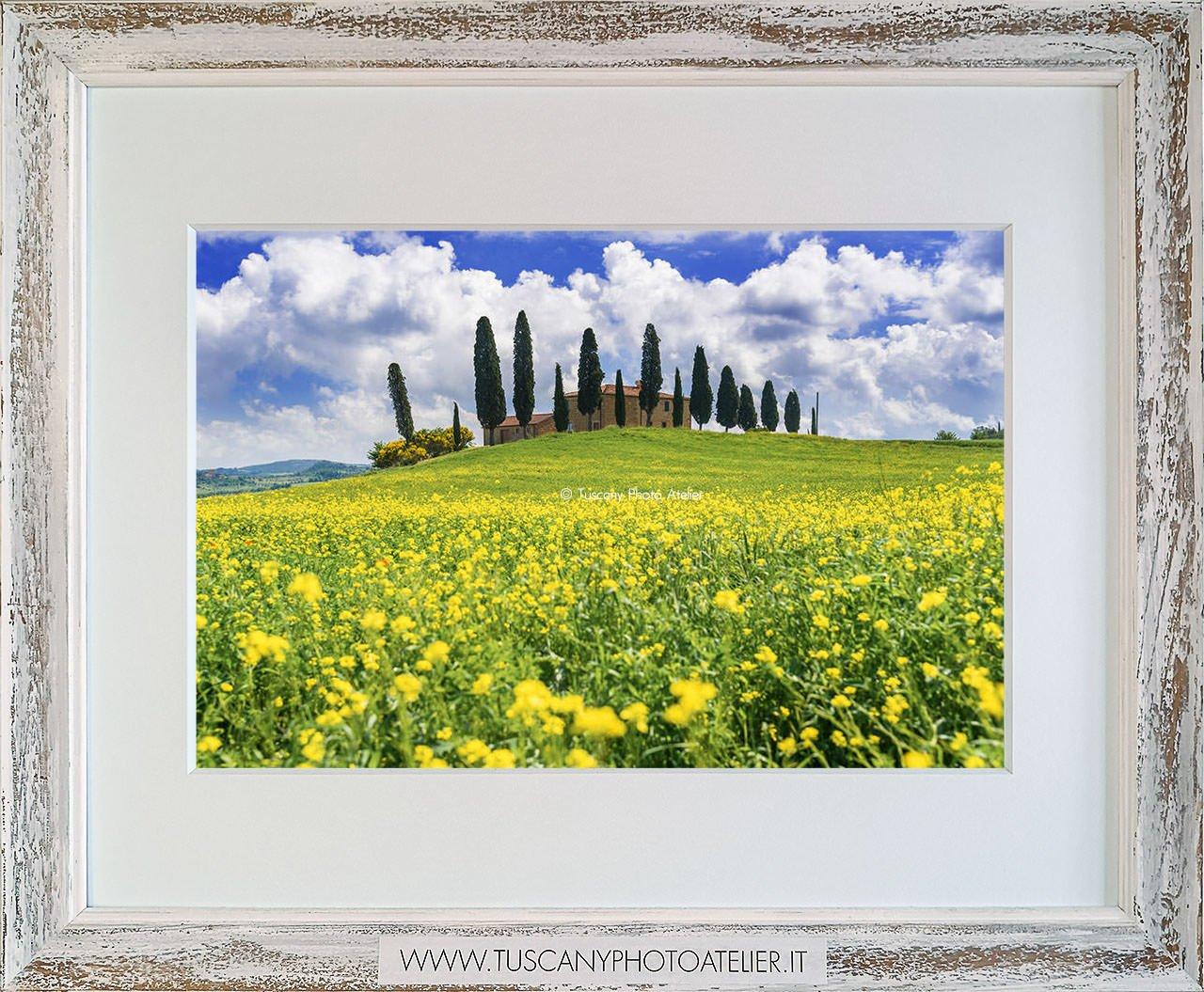 Stampa Fine Art paesaggio della Toscana - Cipressi